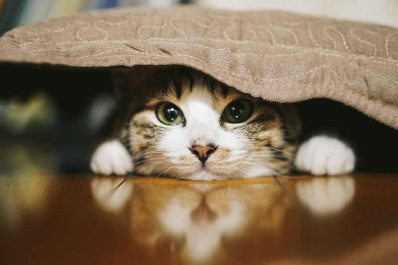 ネコは他の動物とちがって「タダ飯」を好むことが明らかに